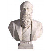 Charles Darwin Bust - Roman Stone Finish - 69cm