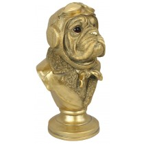 Gold Bulldog Bust 35cm