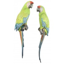 Pair Buffons Macaws - 70cm
